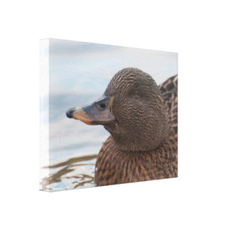 Lona: Pato femenino del pato silvestre Impresiones En Lona