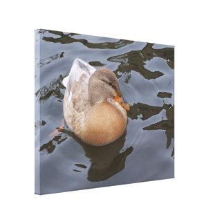 Lona: Pato femenino del pato silvestre Lienzo Envuelto Para Galerias