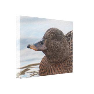 Lona: Pato femenino del pato silvestre Lona Estirada Galerías