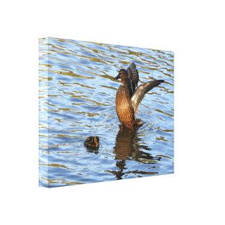 Lona: Pato y anadón del pato silvestre Lona Estirada Galerías