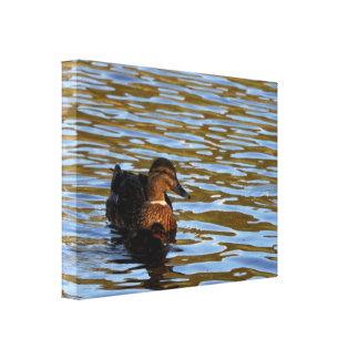 Lona: Pato y anadón del pato silvestre Lona Estirada Galerias