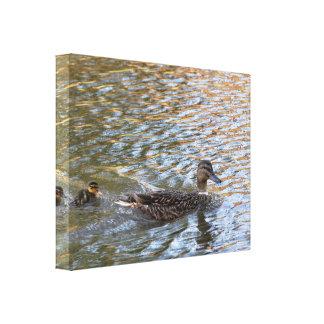 Lona: Pato y anadón del pato silvestre Impresiones En Lona