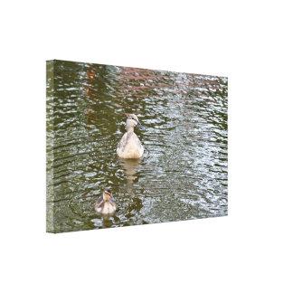 Lona: Pato y anadón femeninos del pato silvestre Impresiones En Lona