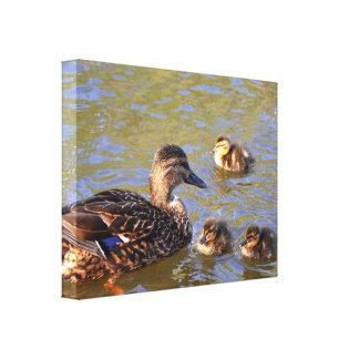 Lona: Pato y anadones del pato silvestre Impresiones En Lienzo Estiradas
