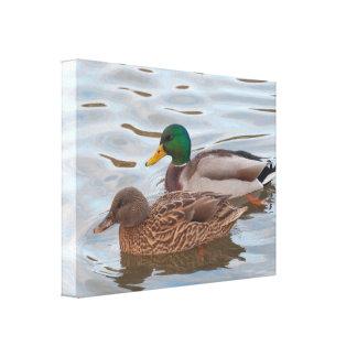 Lona: Patos del pato silvestre Impresión De Lienzo