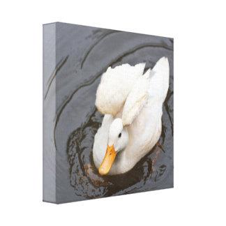 Lona: Pequeño pato blanco Impresión De Lienzo
