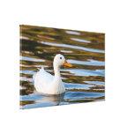 Lona: Pequeño pato blanco Impresiones En Lona Estiradas