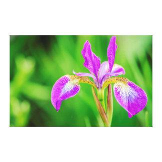 Lona púrpura violeta poética hermosa de la flor impresion de lienzo