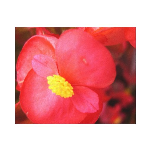 Lona roja de la flor impresión en lona