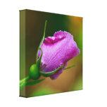 Lona rosada de la fotografía del Wildflower del ca Impresión En Lienzo Estirada