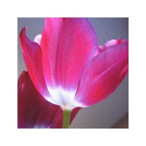Lona rosada oscura del tulipán lona envuelta para galerías