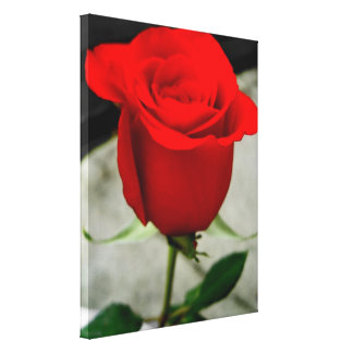lona soñadora del rosa rojo impresión en lona estirada