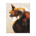 Lona tricolora del gato impresion en lona
