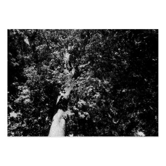 London Plane Tree B&W, Mini Photo Large Business Cards (Pack Of 100)