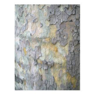 London Plane Tree Bark Postcard