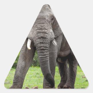 Lone African elephant bull. Triangle Sticker