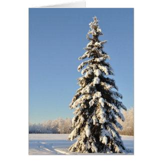 Lone Alaska Spruce Tree in Winter Card