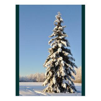 Lone Alaska Spruce Tree in Winter Postcard