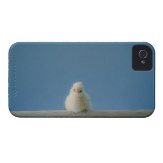 Lone Baby Pet Chicken Sitting on a Perch Case-Mate iPhone 4 Case