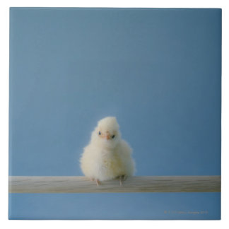 Lone Baby Pet Chicken Sitting on a Perch Ceramic Tile