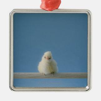 Lone Baby Pet Chicken Sitting on a Perch Metal Ornament