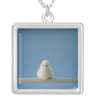 Lone Baby Pet Chicken Sitting on a Perch Silver Plated Necklace