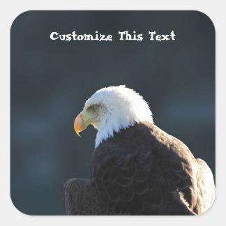 Lone Bald Eagle; Customizable Square Sticker