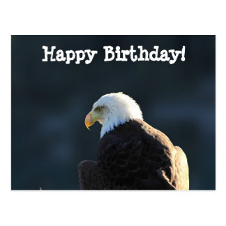 Lone Bald Eagle; Happy Birthday Postcard