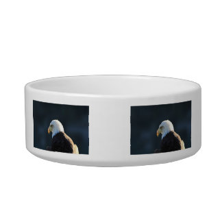Lone Bald Eagle; No Greeting Bowl