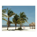 Lone Beach At Fort Myers Beach Florida Postcard