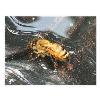 Lone Bee Photo Print