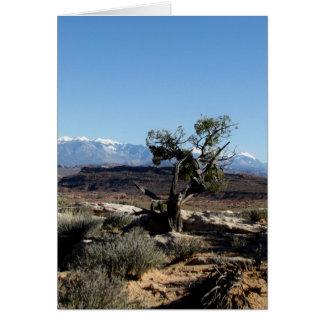 Lone Bristlecone Pine Card