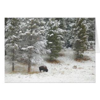 Lone Buffalo In Yellowstone Card