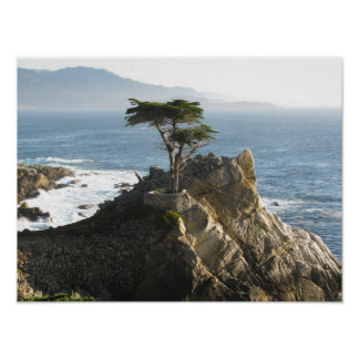 Lone Cypress in 17 Mile Drive Poster