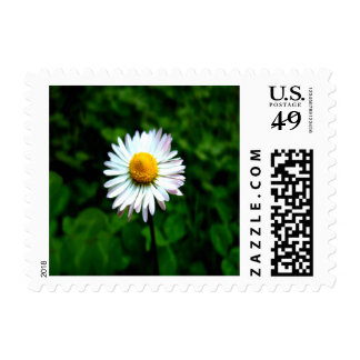 Lone Daisy Small Stamp