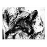 Lone Desert Coyote, D.B. Martin  2005 Postcard