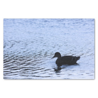 Lone Duck Wildlife Lake Water Ripples Photography Tissue Paper