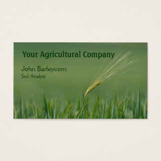 Lone ear of barley in a field business card