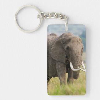 Lone Elephant (Loxodonta Africana) Feeds Keychain