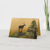 Lone Goat Marvels At Christmas Tree Holiday Card