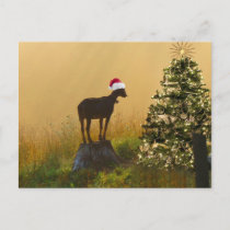 Lone Goat Marvels At Christmas Tree Holiday Postcard