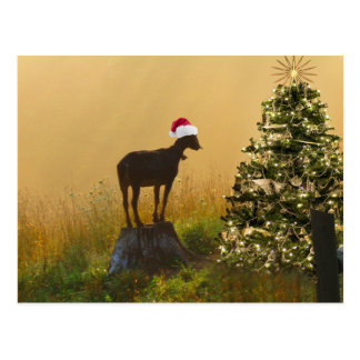 Lone Goat Marvels At Christmas Tree Postcard