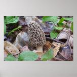 Lone Grey Morel Mushroom Print