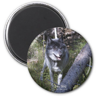Lone Grey Wolf in Canadian Rockies 2 Inch Round Magnet