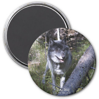 Lone Grey Wolf in Canadian Rockies 3 Inch Round Magnet