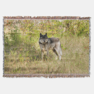 Lone Grey Wolf in the Wilderness Throw