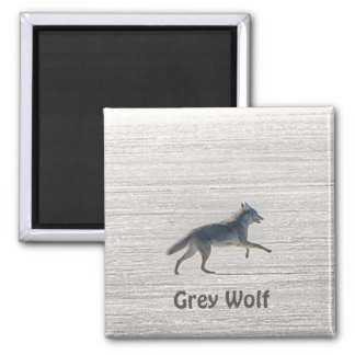 Lone Grey Wolf Running on A Frozen Lake 2 Inch Square Magnet