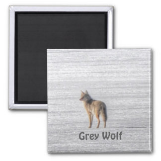 Lone Grey Wolf Standing on A Frozen Lake 2 Inch Square Magnet