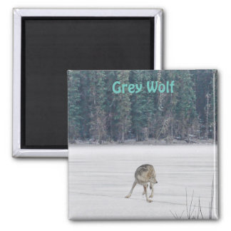 Lone Grey Wolf Standing on A Frozen Lake I 2 Inch Square Magnet