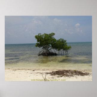 Lone Mangrove Tree Poster